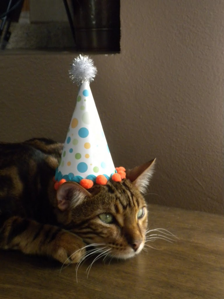 How To Make A Birthday Hat For Your Pet